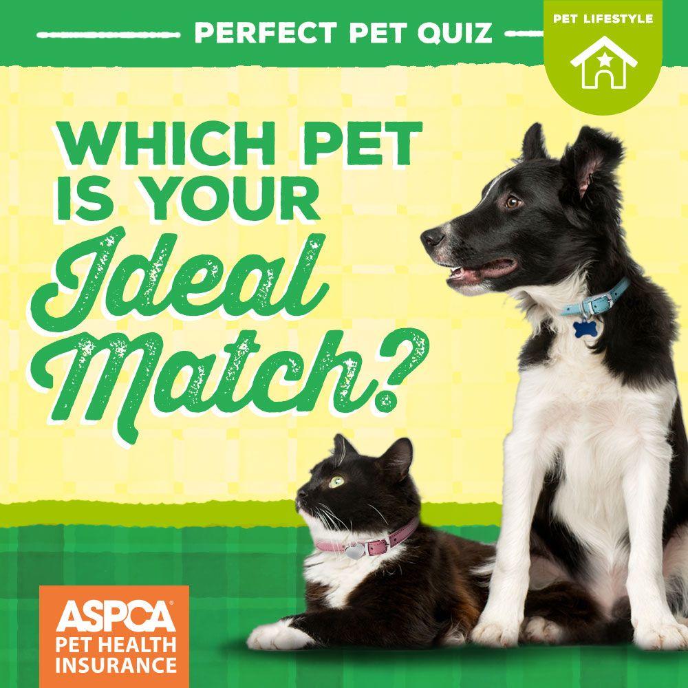 perfect pet match quiz