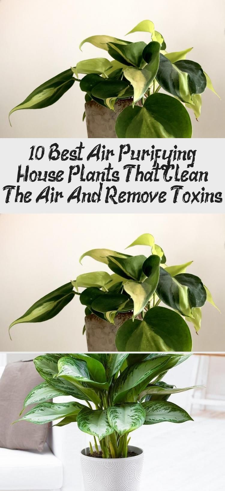 10 Best Air Purifying House Plants That Clean The Air And