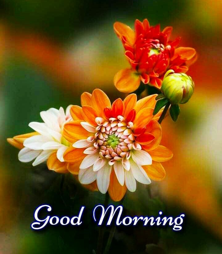 Good Morning Images For Whatsapp Free Download Hd Wallpaper Pictures Photos Of Good Morn Good Morning Flowers Good Morning Images Flowers Good Morning Cards
