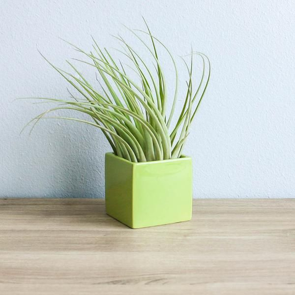 Set of 3 Geometric Containers with Custom Tillandsia Air Plants / Avoc - Air Plant Supply Co.