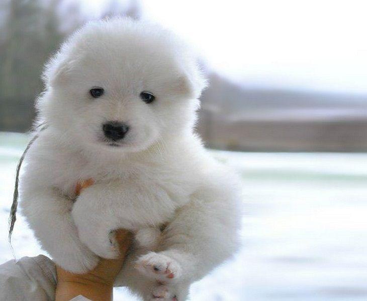 Best Cdog Chubby Adorable Dog - 13307d83d4ec5dd6ba7a10dee841186b  Image_677810  .jpg
