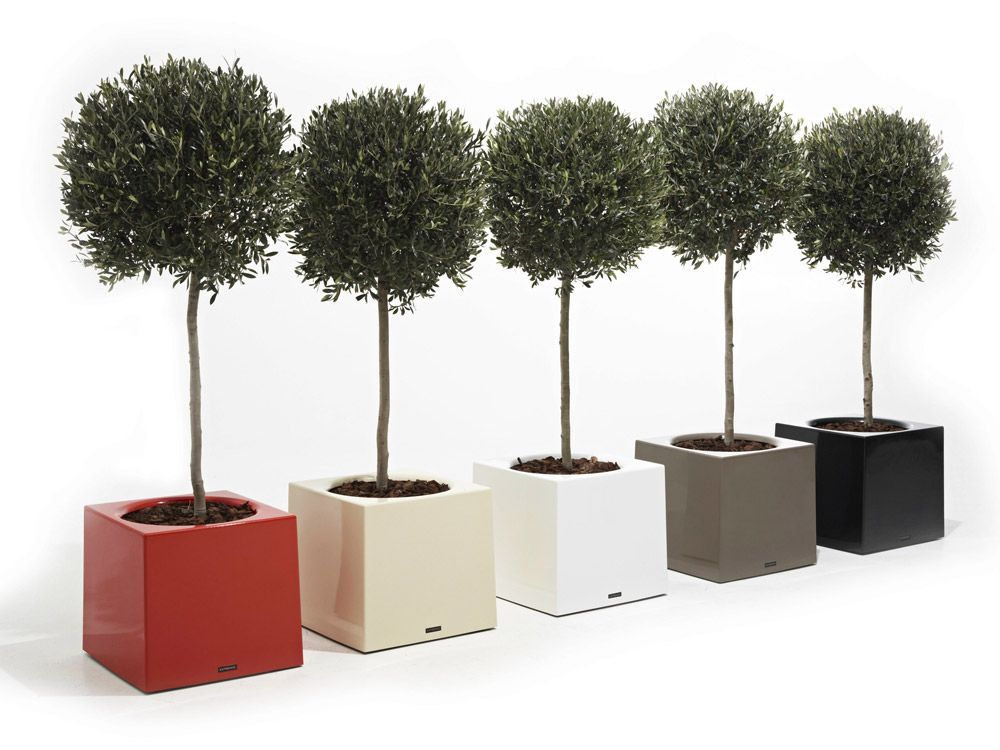 Vases Flower Box Alea by @extremis #designbest