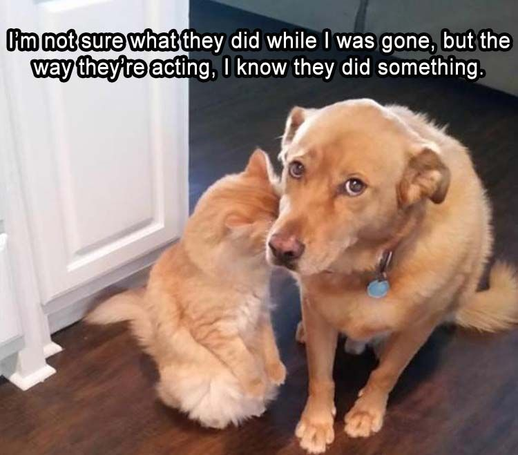 Afternoon Funny Picture Dump 35 Pics Cute Animals Cute Funny