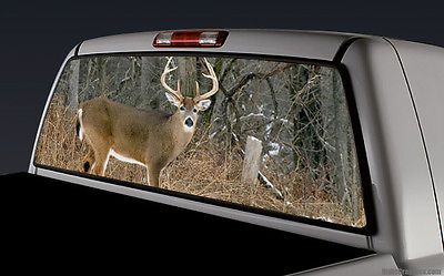ASUS VAAQ WQHD P Ms IPS DisplayPort HDMI VGA Eye Care - Rear window hunting decals for trucksdeers in a forrest bw window graphic tint decal sticker truck