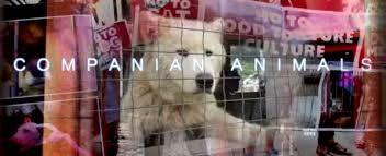 South Korean Dog&Cat Eating