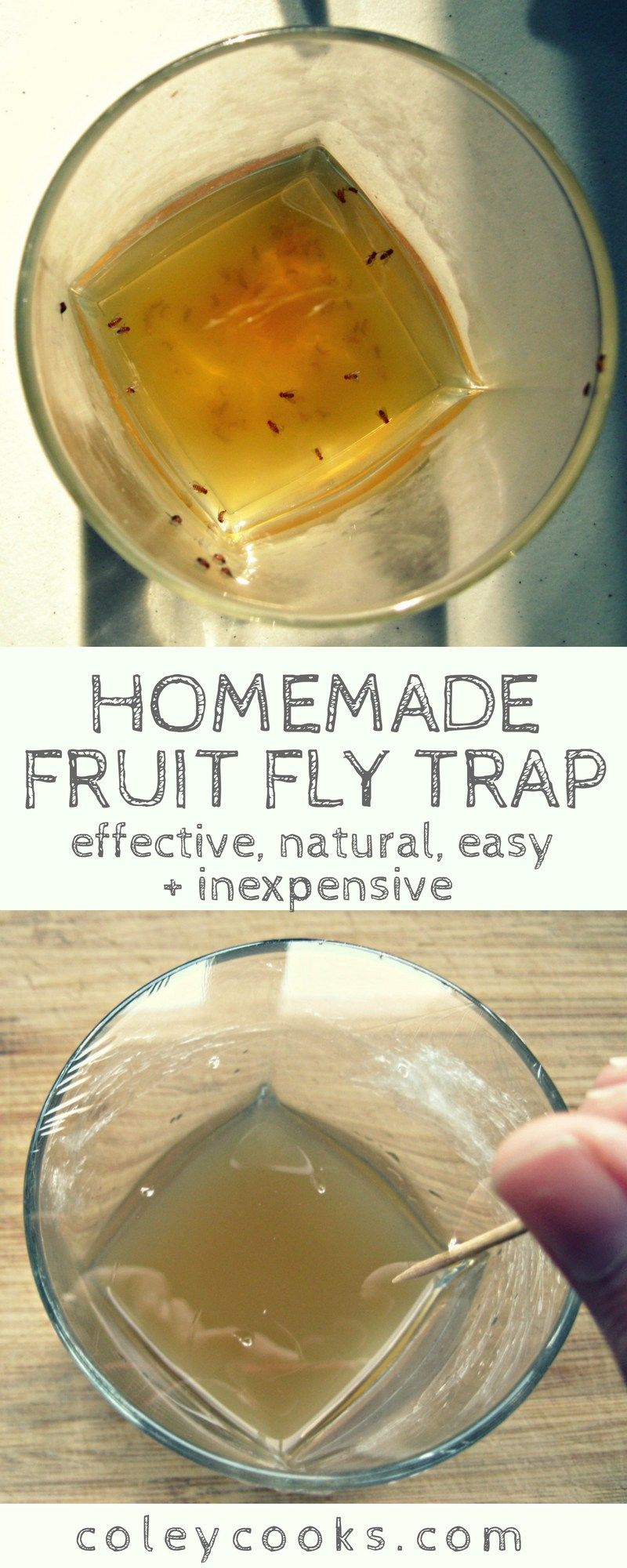 Where Fruit Flies Go To Die Fruit Fly Trap Homemade Fruit Fly Trap Homemade Fly Traps