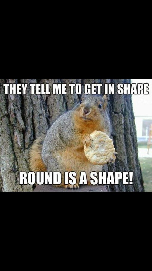 He S Right Squirrel Funny Funny Animal Memes Funny Animal Pictures