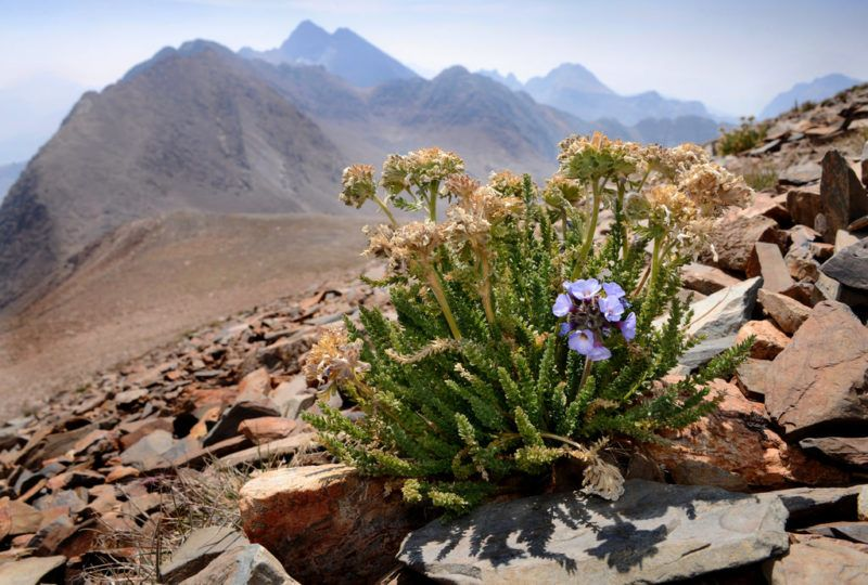 Botany Photo of the Day Page 2 Sierra nevada, Plant