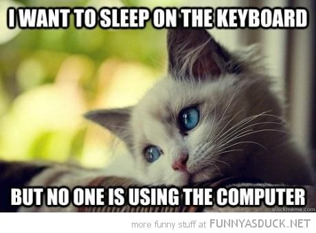 Funny No Sleep Meme : Funny sleep captions lolcat animal thinking want sleep keyboard
