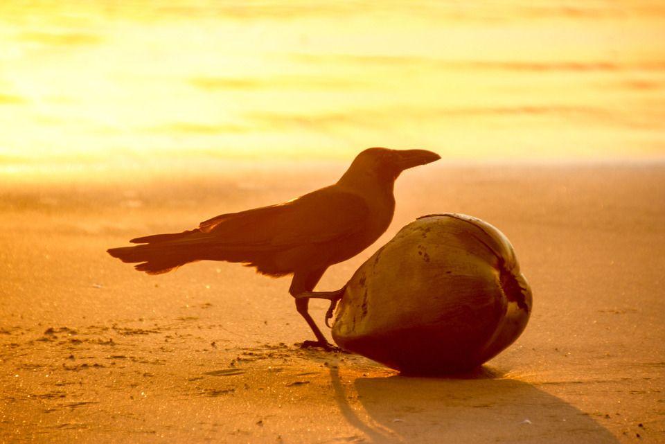 wer hat die Kokosnuss geklaut? Foto: frommel