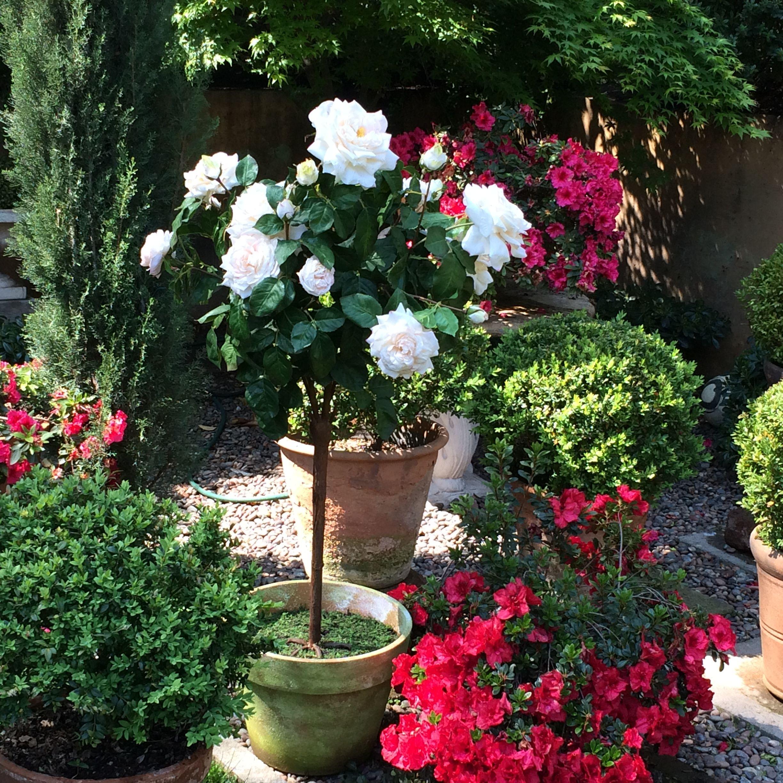Rosa Pie Alto Artificial Flores Artificiales Jardinería Y