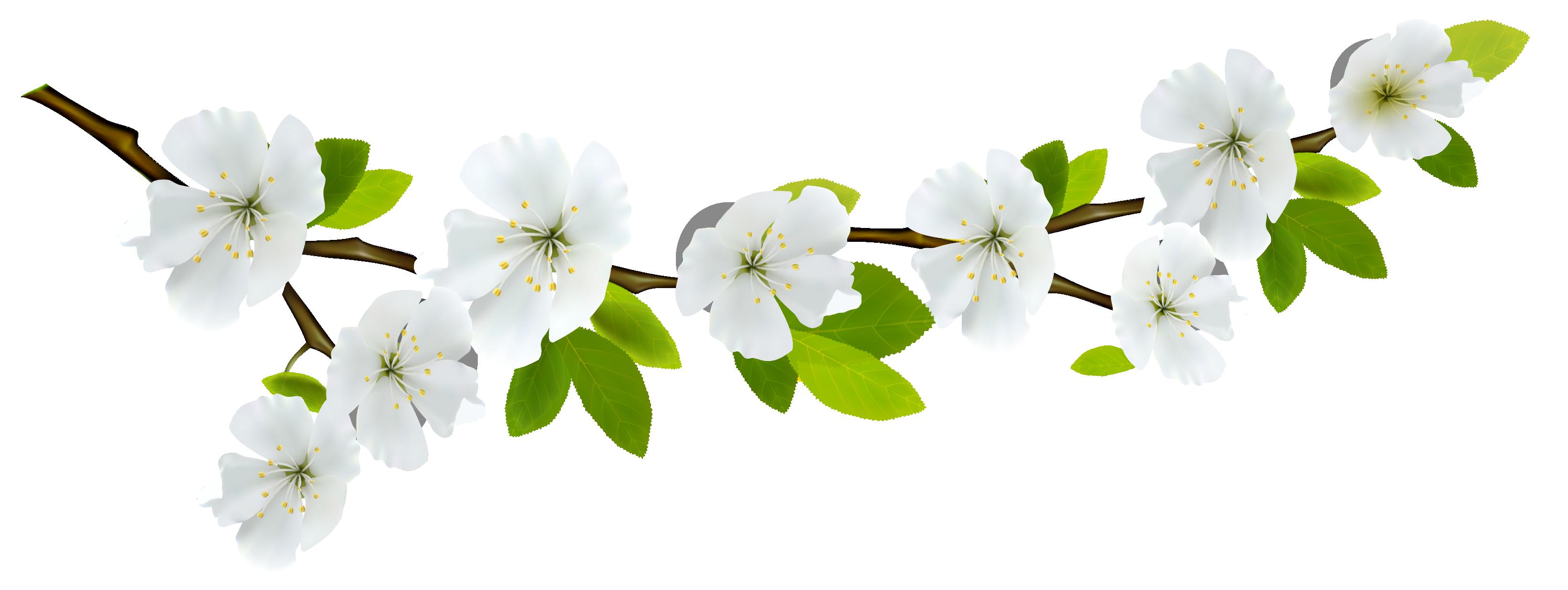 Картинка ветка яблони на прозрачном фоне
