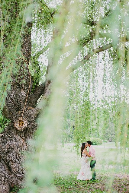 Matt Hope Willow Tree Wedding Tree Photography Tree Wedding