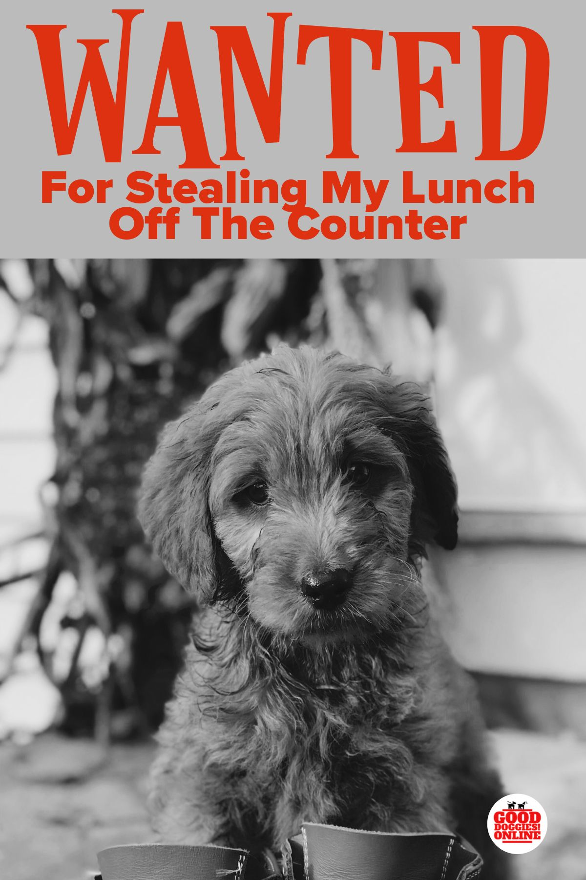 5 Tips To Stop Your Dog From Stealing Your Food Gooddoggies