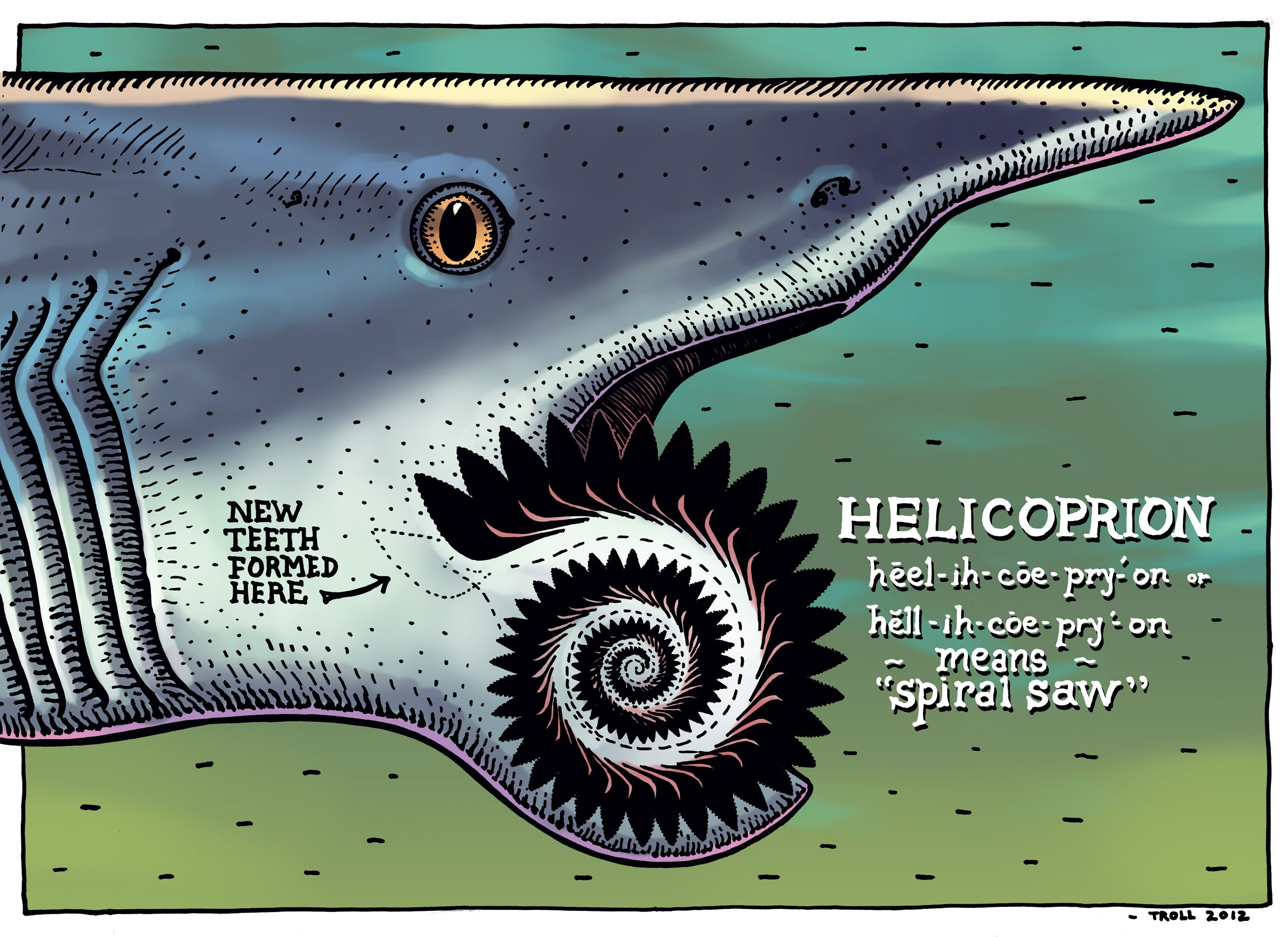 Buzzsaw Jaw Helicoprion Was A Freaky Ratfish