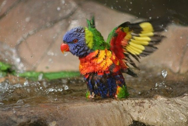 Weblyest - These 28 Animals Have Some Insanely Bright Colors (28 Photos)