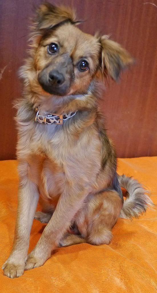 Hund Pinscher Mix Mischling Hundin 6 Monate In Eutingen Im Gau Baden Wurttemberg Hunde Welpen Welpen Hunde Fotos