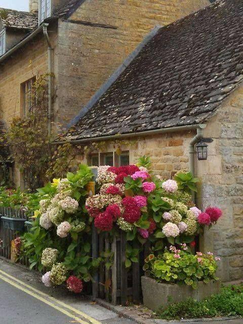 Comme en Bretagne avec des massifs d\'hydrangea.   Mon Jardin My ...