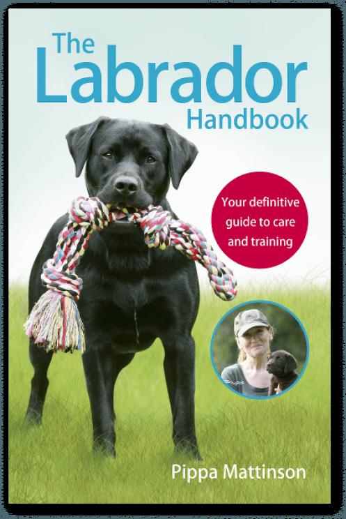 Labrador Puppies A Complete Guide Gethimtochaseyou Puppy