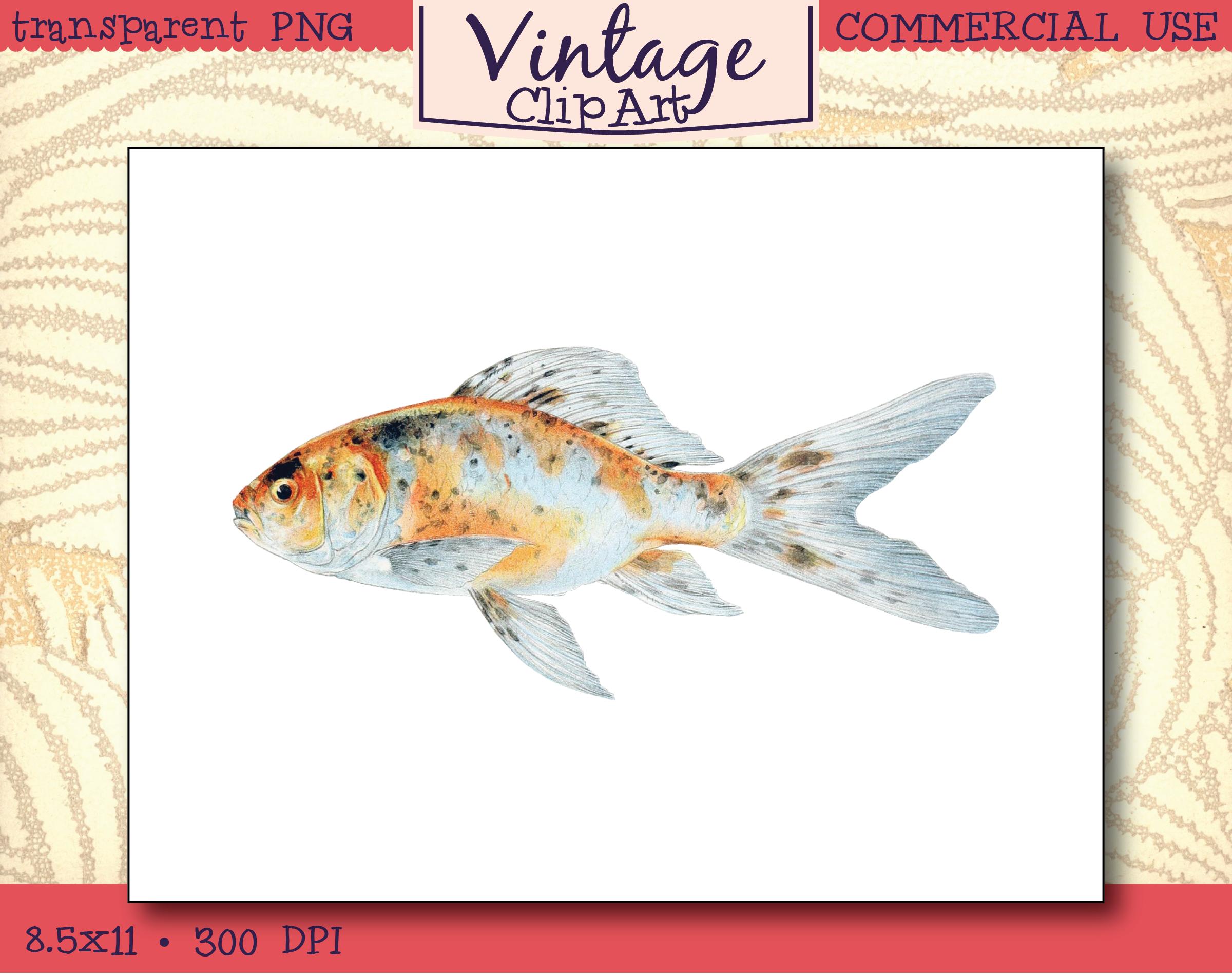 Vintage Fish Clipart – The Shubunkin-Speckled Goldfish – Instant Download
