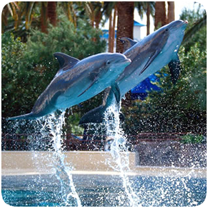 siegfried roys secret garden and dolphin habitat the mirage hotel and casino - Siegfried Roys Secret Garden And Dolphin Habitat