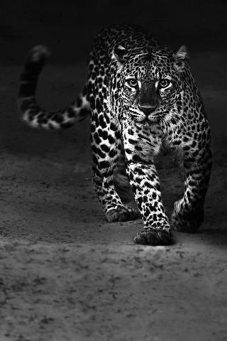 gepard ~ beautiful♥