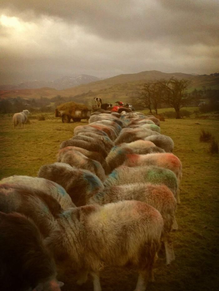 Twitter Tuesday: Follow the Herd (and @herdyshepherd1 ...