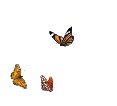 Nature Fave Cute Natural Fillers Outside Animals Butterfly Alive Live Png Pngs Png Overlays Picsart Overlays
