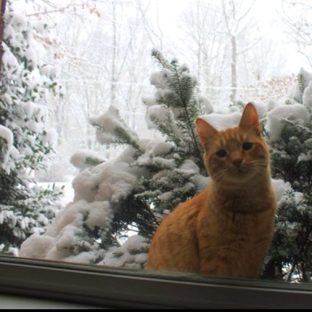 Image result for Kitty on the outside looking in