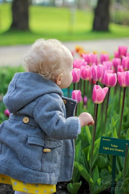 Ashley Daley Photography   The Netherlands with Kids: Tulips and Ocean
