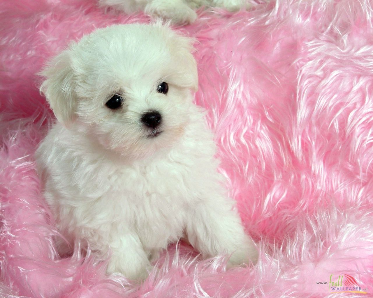 dog pictures | White Baby Dog - Free Wallpapers - #15314 | Dogs ...