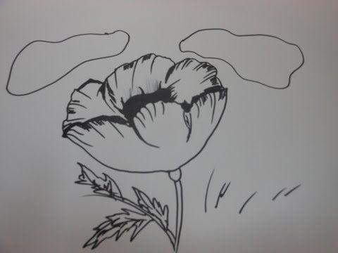 Line Art Photo Tutorial : How to draw a poppy flower step by tutorial youtube