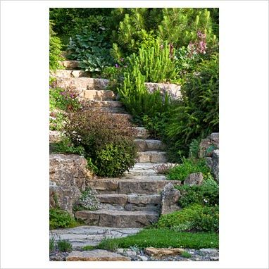 Curved stone steps flanked with dwarf shrubs lead through the rockery with planting of Berberis candidula, Berberis x frikartii 'Amstelveen', Dictamnus albus, Euphorbia dulcis 'Chamaeleon', Gypsophila grazii and Pinus - GAP Photos - Specialising in horticultural photography