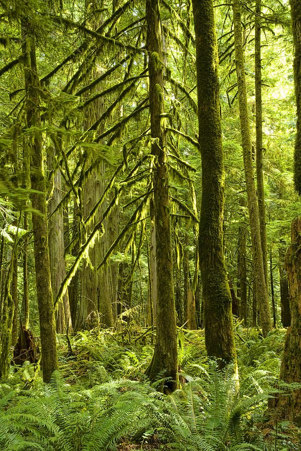 ✯ Rain Forest on Vancouver Island | Amazing ✈ World | Pinterest ...
