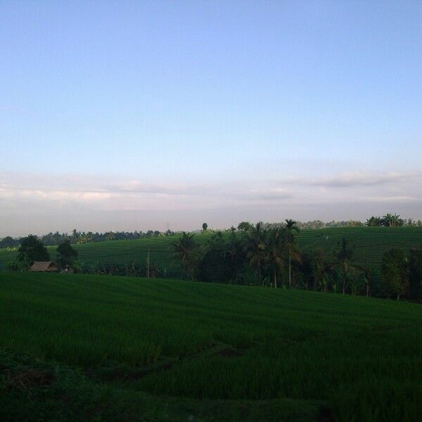 Rice field from main road of sooka bali indonesia.taken in the morning on way from java