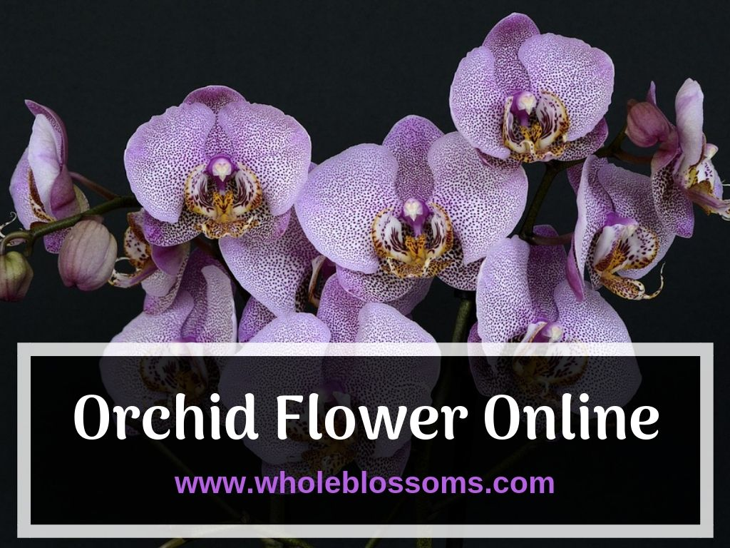 Orchid Flower Is A Great Choice For Any Type Of Decoration It S The Most Popular At Weddings Events Parties And Other Momentous Oc Orchids Buy Orchids Orchids Online