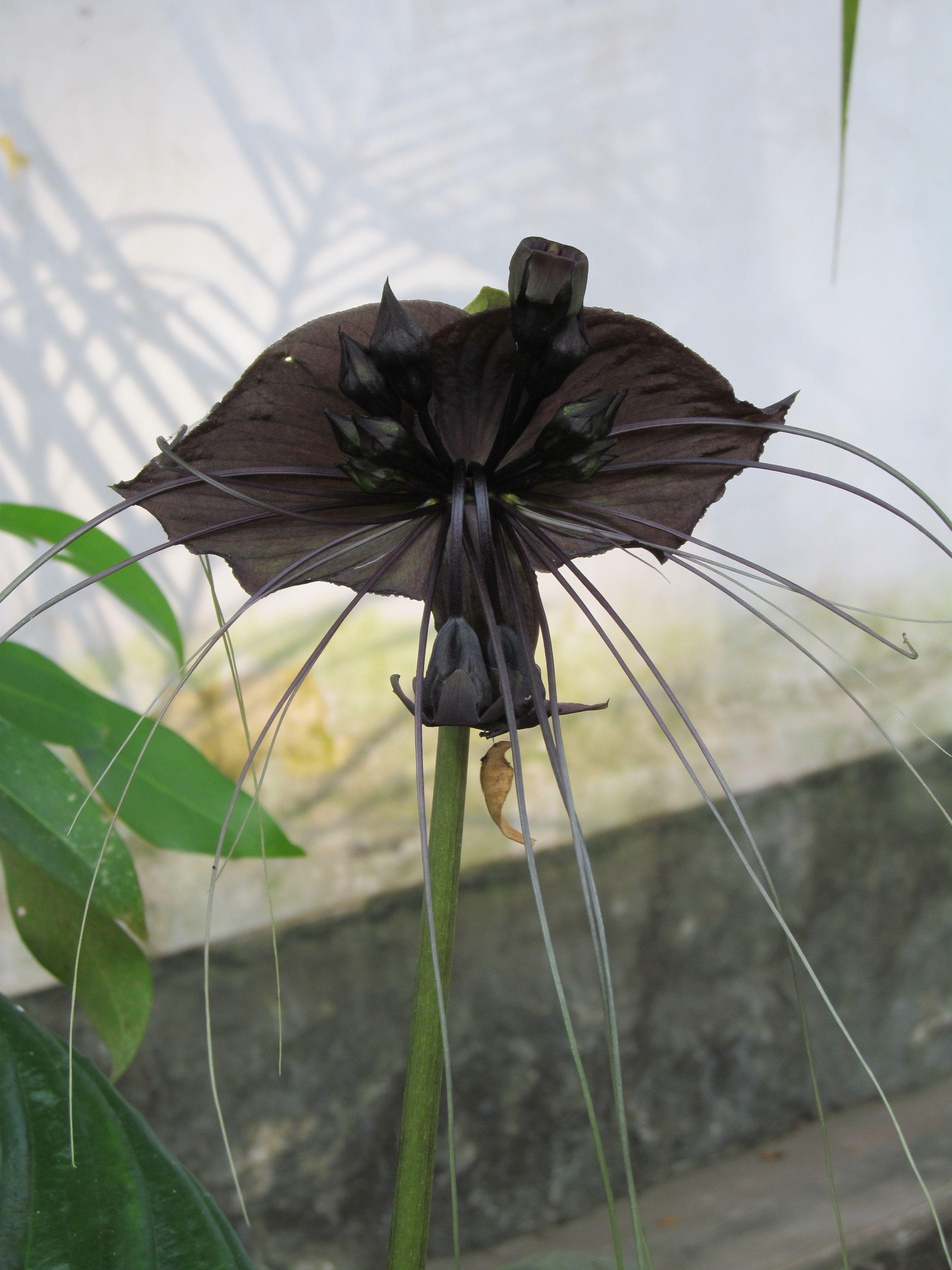 Pin On Lovecraft S Garden