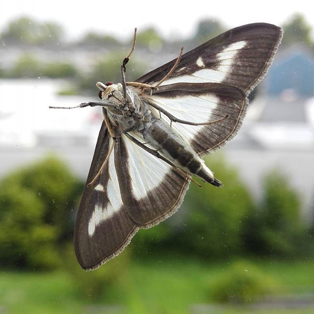 Butterfly or moth nomatter but beautiful animal and butterfly or moth nomatter but beautiful animal and goodmorningbeautiful voltagebd Image collections