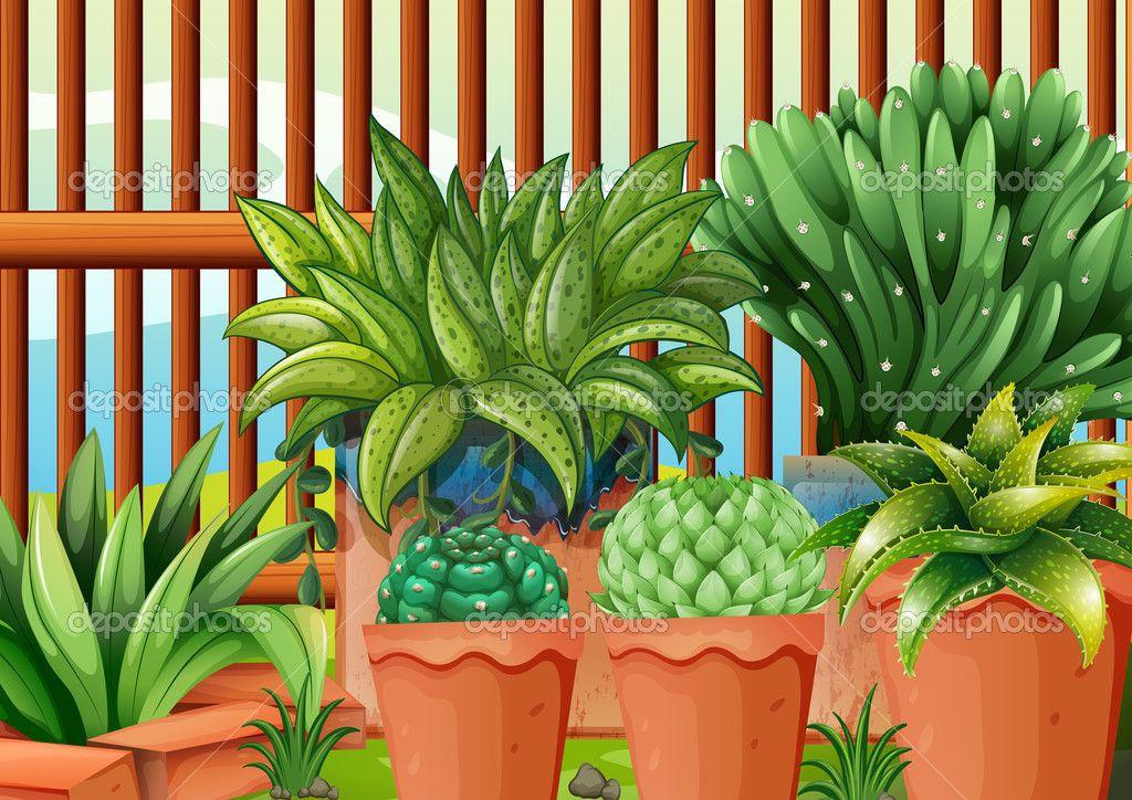 горшки с растениями   Горшечные растения, Растения, Горшки