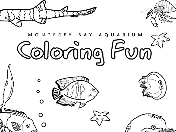 Tons Of Free Coloring Pages From Monterey Bay Aquarium