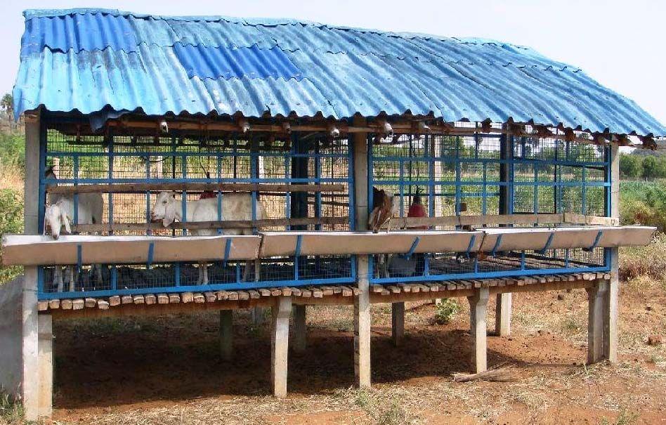 Goat Housing Modern Farming Methods Goat House Farm Shed Goat Shed