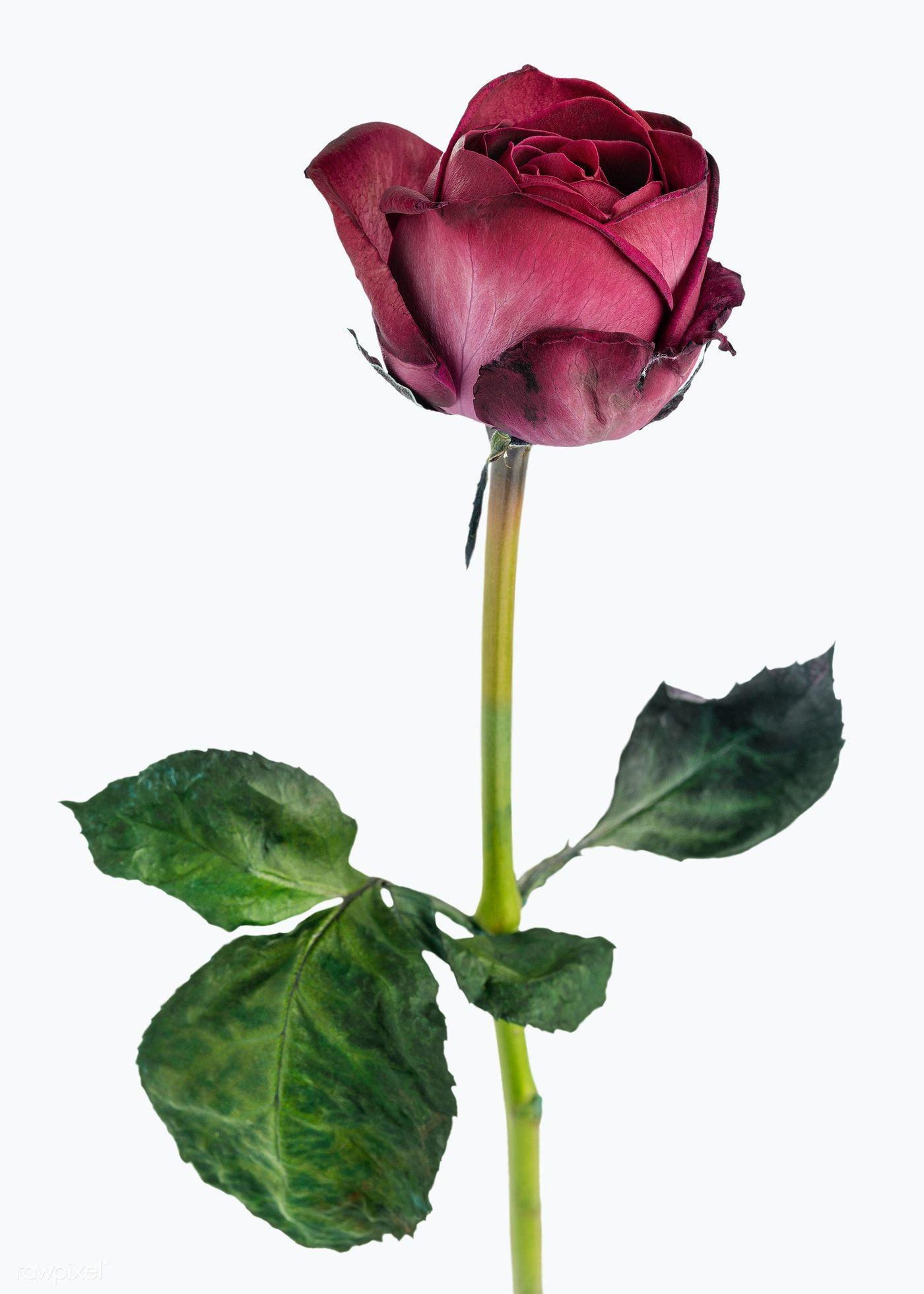 Download Premium Vector Of Red Rose Patterned Background Vector 2211838 In 2020 Flower Illustration Vector Background Pattern Background Patterns