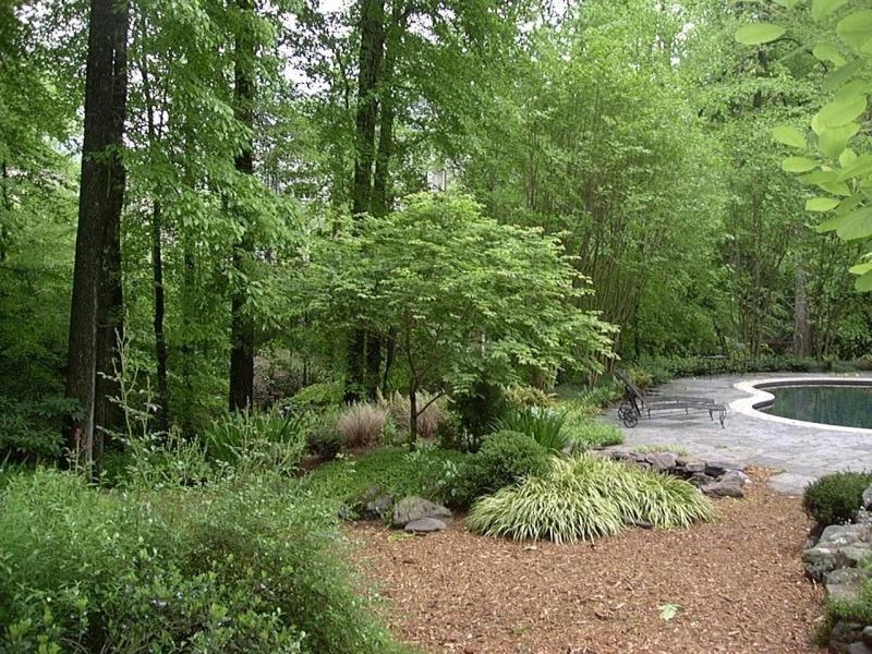 Beautiful Woodland Garden In Georgia Woodland Garden Shade Garden Backyard Garden