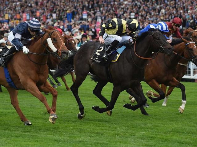 How to bet on horse racing in dubai mh bet on it