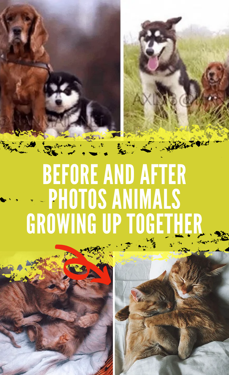 35 Photos Of Animals And Owners Growing Up Together That Prove Friendship Can Last Forever In 2020 Birthday Barbeque Animals Animal Photo