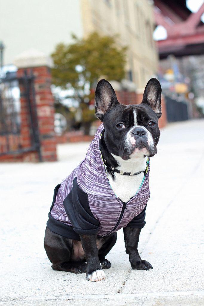 Frenchie Dog Hoodie Empire Frenchie Bulldog Hoodies