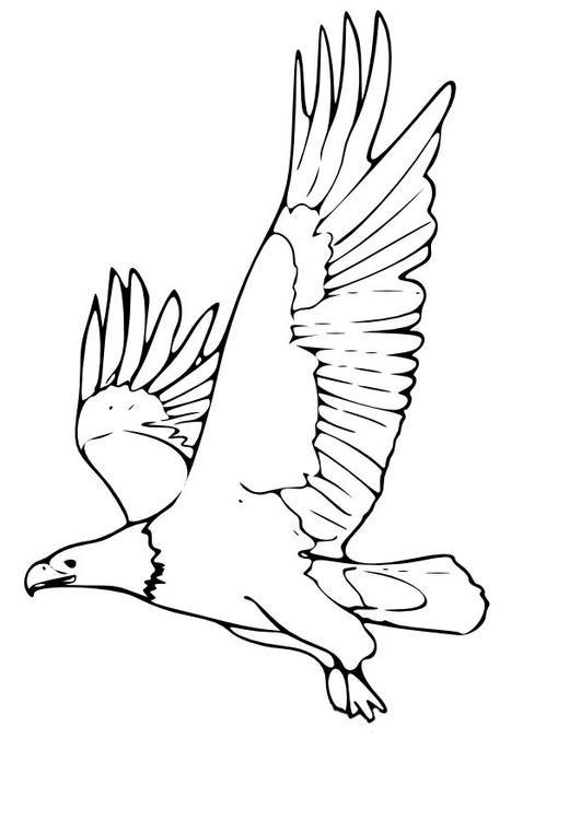 R sultat de recherche d 39 images pour aigle royal dessin - Dessin de aigle ...