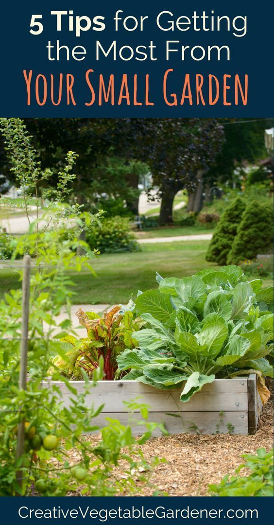 My Best Tips On How To Start A Small Vegetable Garden Thatu0027s Bursting With  Produce All