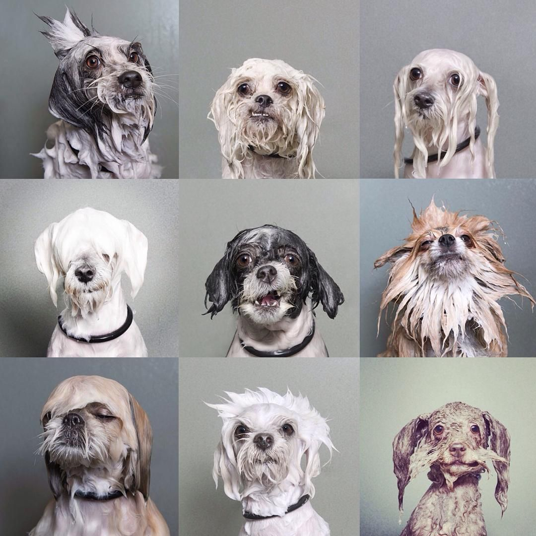 sophie gamand's wet dog book.