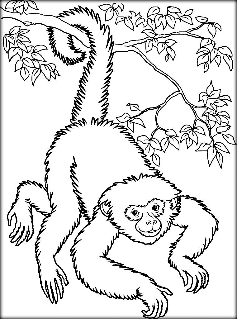 Gibbon Coloring Page